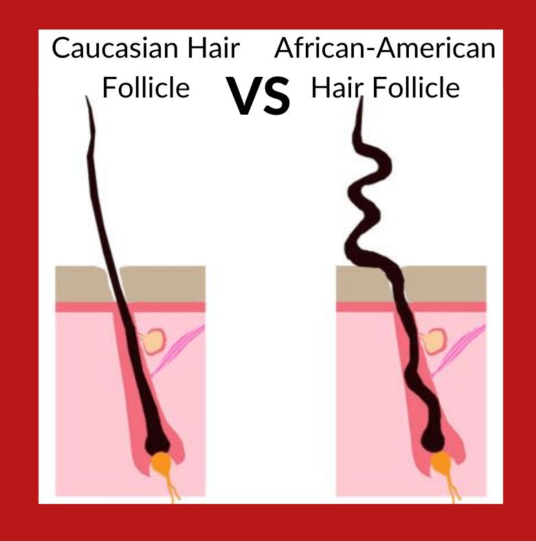african-american Hair Follicle maxim