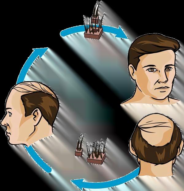 fue hair cycle